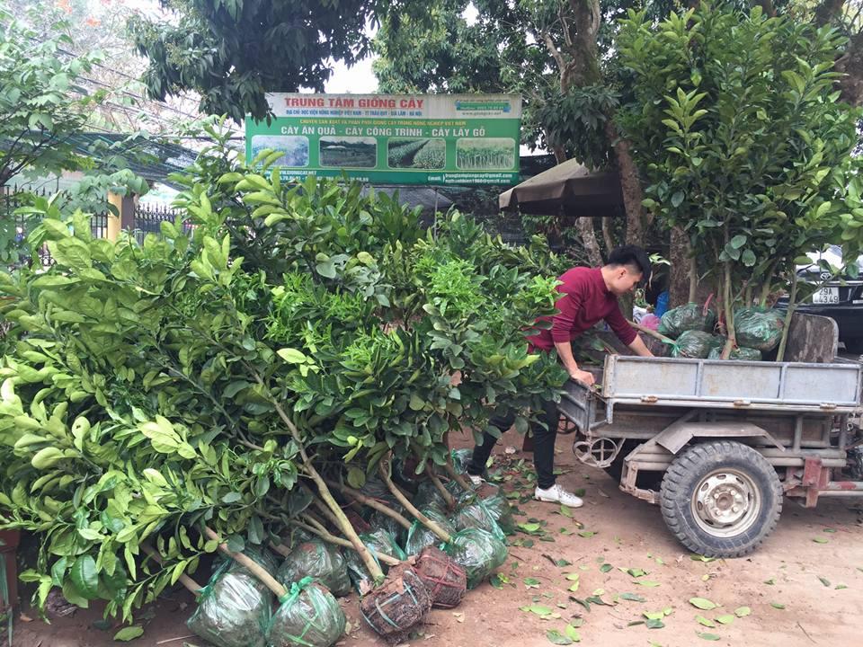 Giống cây ăn quả là một sự lựa chọn làm giàu cho người làm nông nghiệp